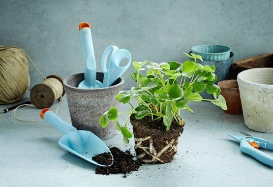 Направете градината си още по-цветна